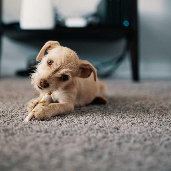 Carpet, pet friendly, install, Flooring Pros Augusta