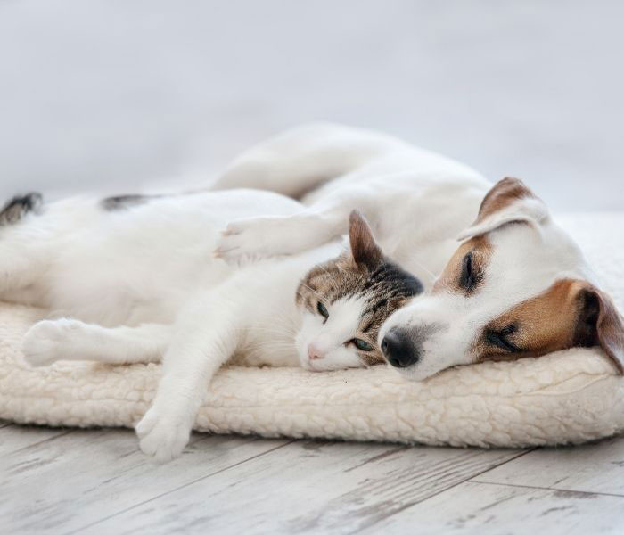 which flooring is best for dogs cats